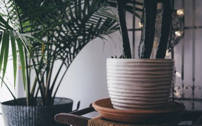 The Best Plants to Grow Inside