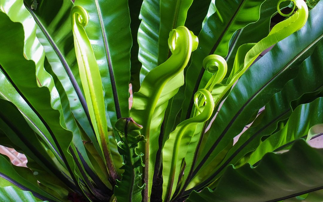 Growing Ferns Inside