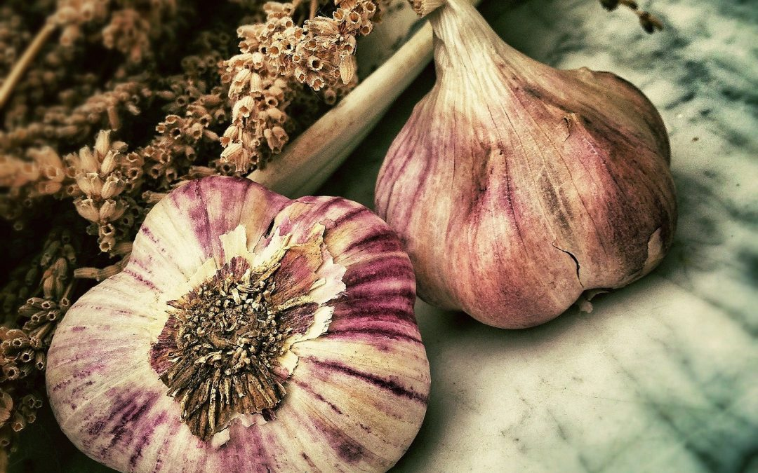 Growing Garlic Indoors. a guide.