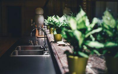 Should You Grow Plants Indoors?