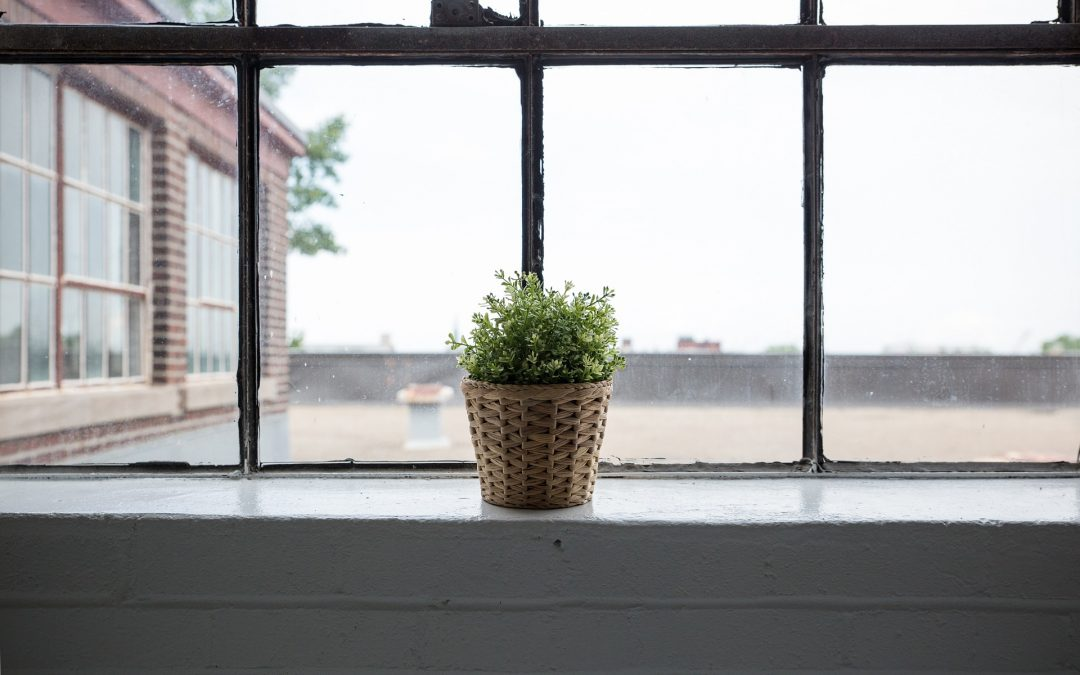 Indoor Plants can survive without Sunlight, but…